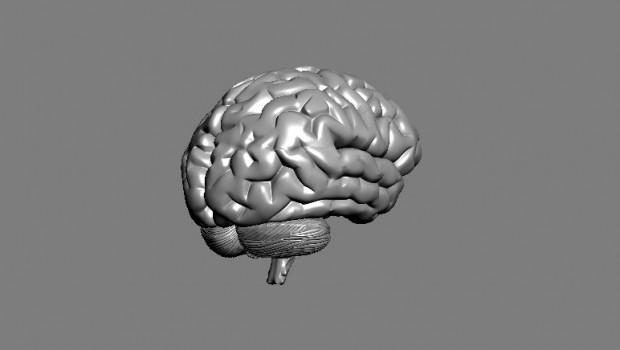 brain model free