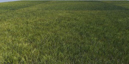 grass vrayfur